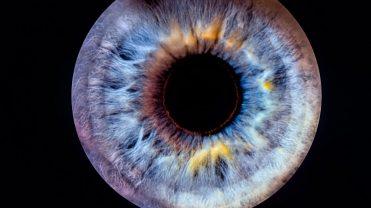 SmartBee Club- ewolucja oka